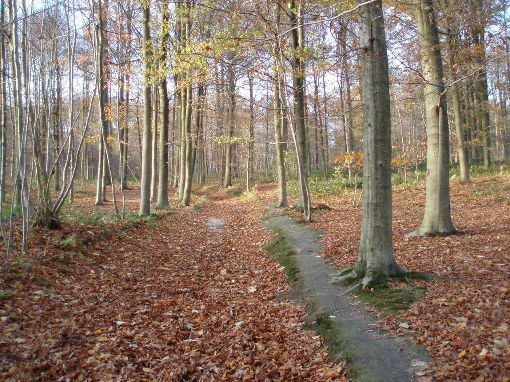 """Résultat de recherche d'images pour """"promenade dans les bois"""""""